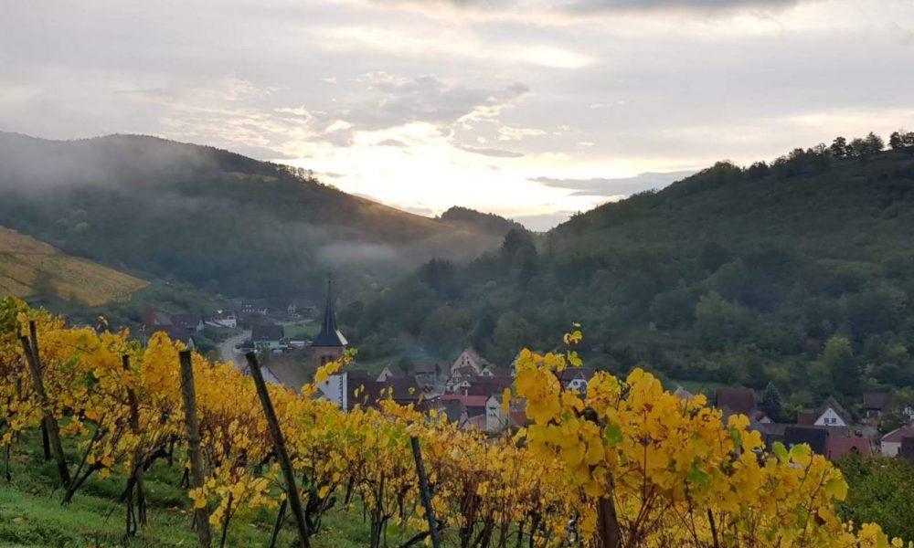 albe-maisonmoritz-prado-vins-alsace